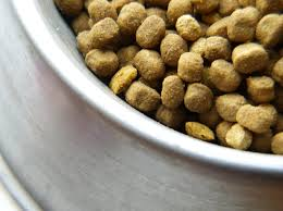 image of dried dog food for pitbull