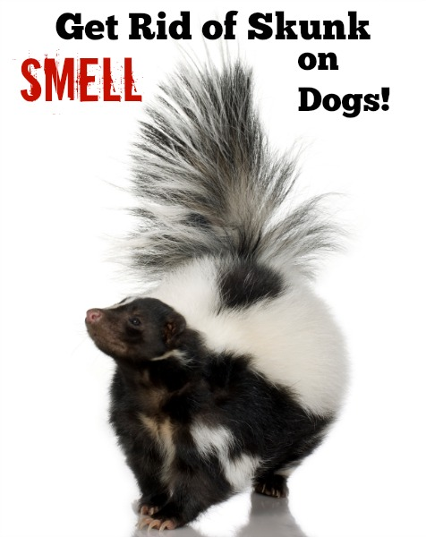how to get rid of skunk smells on dogs