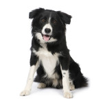 Best Dogs for Agility Training