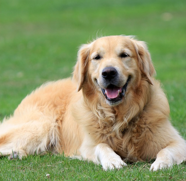 Top 10 Best Dogs for Beginners - Me And My Pet