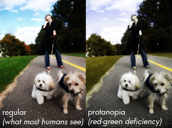 how dogs see the world